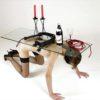 Форнифилия: Живая мебель